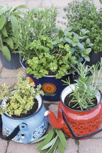 jiffy plant tray instructions
