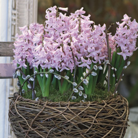Pretty in Pink hanging basket