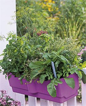 Herbs a' Plenty, a project from Seasonal Garden Ideas
