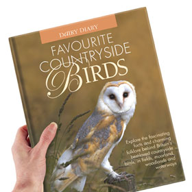 Win Favourite Country Birds