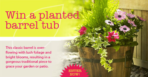 Competition | Win this gorgeous planted barrel tub