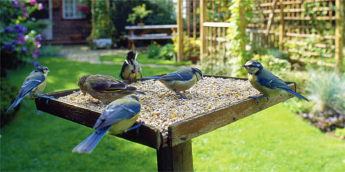How to create a bird-friendly garden