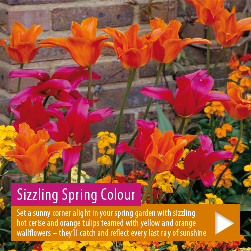 Plant now for a gorgeous spring display