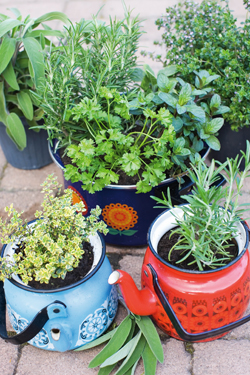 Grow kitchen herbs