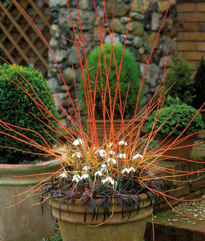 Fiery Winter Pot from Seasonal garden Ideas