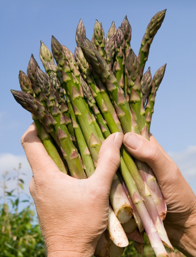 Bravo for British asparagus