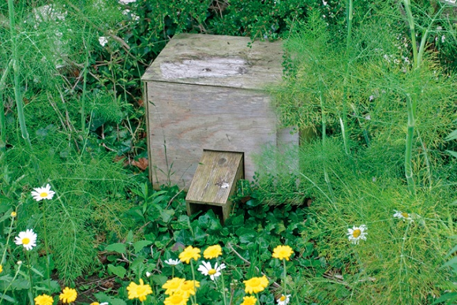 Build a Hedgehog Box