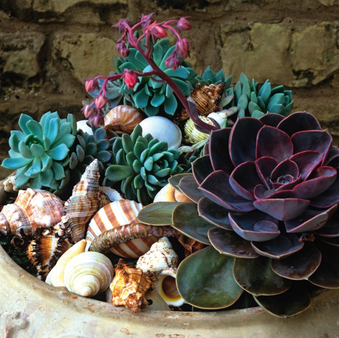 Succulents and Seashells project