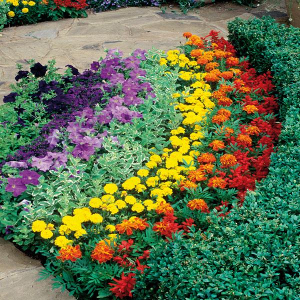 Win £50 Garden Voucher