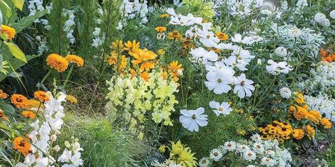 Garden colour schemes