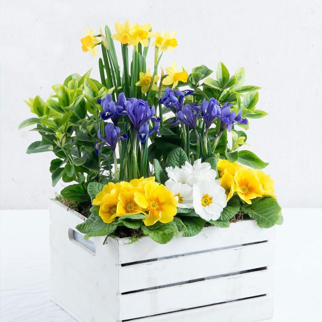 Win this outdoor planter